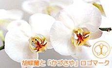 上総屋のシンボル「胡蝶蘭」